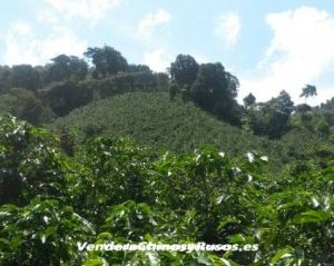 Empresa de Café a la venta en Panamá (Finca, marca, exportadora)
